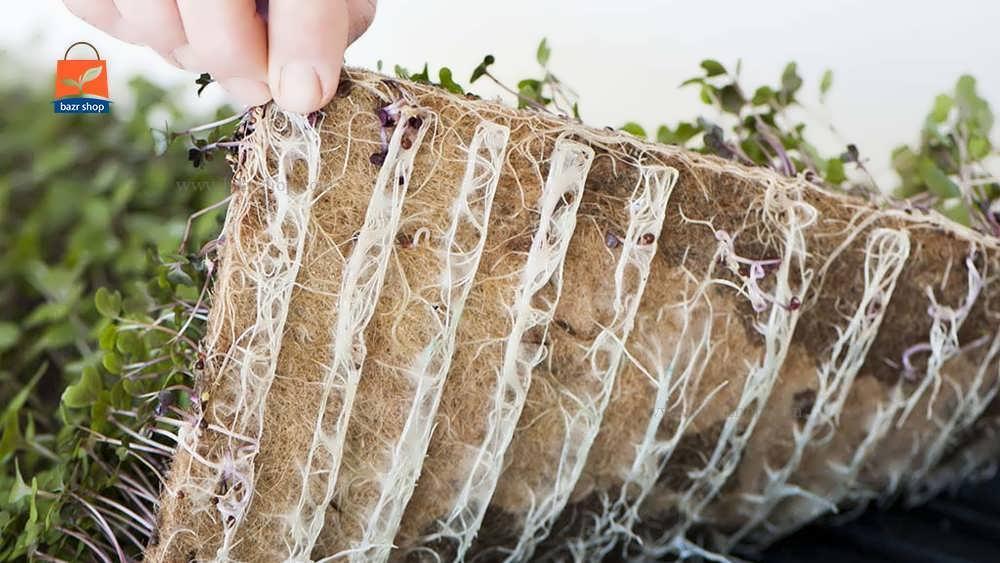 بستر کاشت بذر میکروگرین