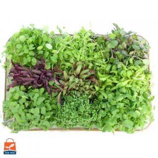 مجموعه 18 بذر میکرو گرین