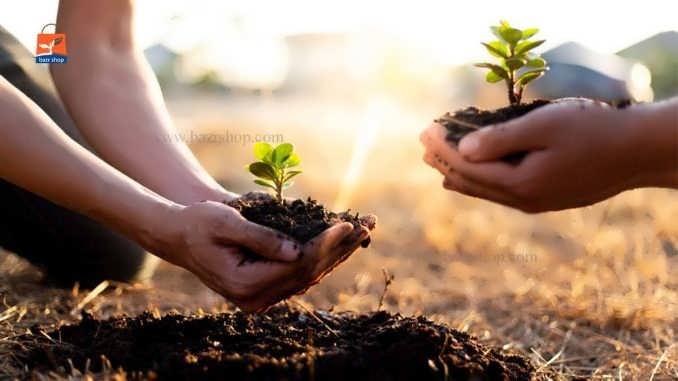 چگونگی کاشت بذر درخت