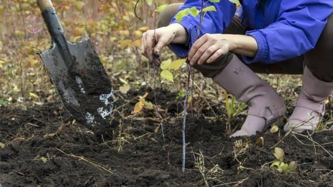 چگونگی کاشت بذر درختچه