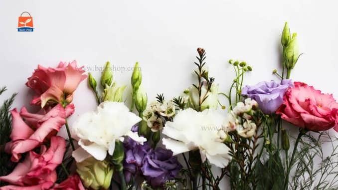 معرفی گلهای آپارتمانی گران قیمت