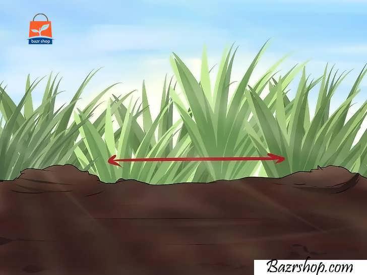 برای هر گیاه، فضایی کافی برای رشد در نظر بگیرید