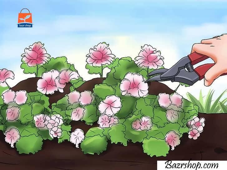 با جدا کردن گلهای خشک شده، گیاه خود را سالم نگه دارید