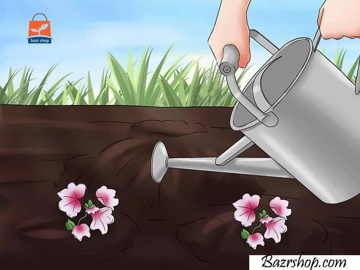 گیاهان خود را در صورت نیاز آبیاری کنید