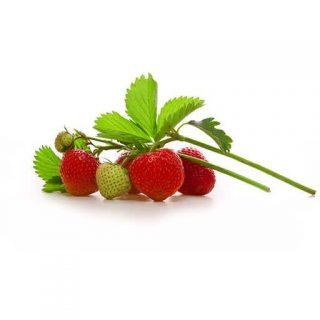 بذر توت فرنگی بونسای قرمز