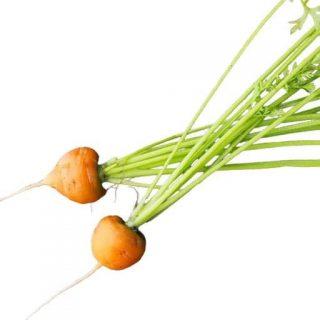 بذر هویج اطلس