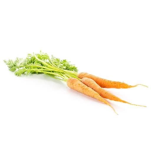 بذر هویج دانورس