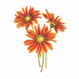 گل گازانیا زرد