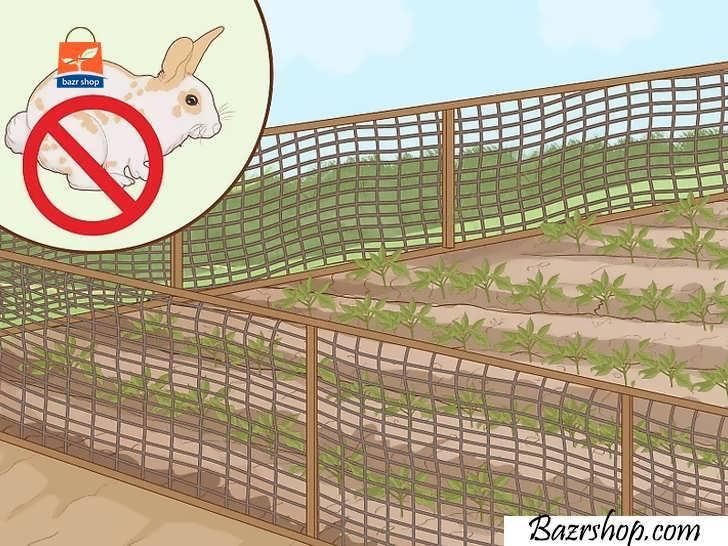 خرگوش ها را دور نگه دارید