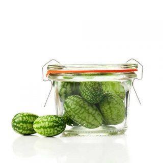 گیاه خیار مکزیکی