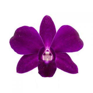 گل ارکیده بنفش