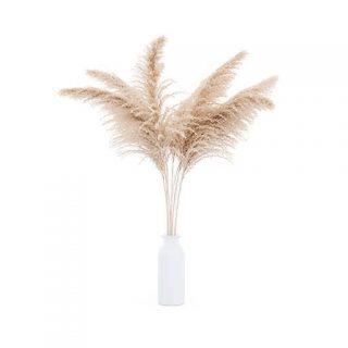 بذر پامپاس گراس