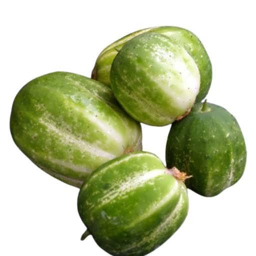 بذر خیار سیب سبز ریچارد