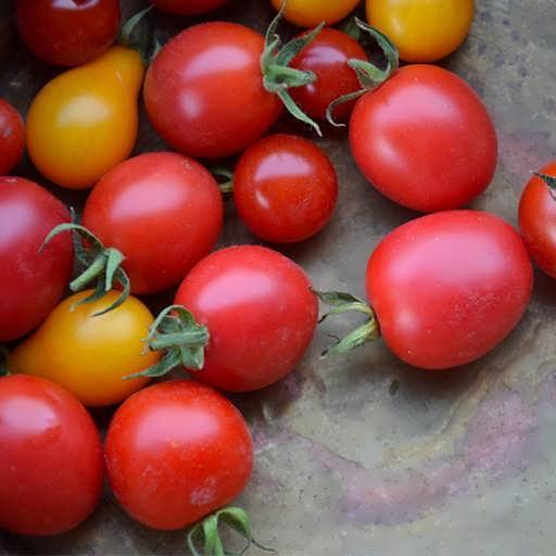 گوجه فرنگی کوچک