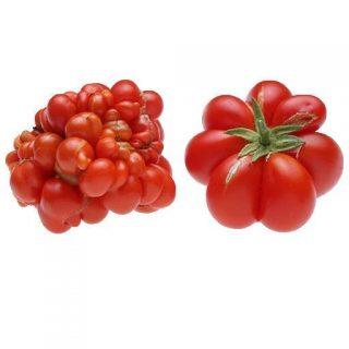 گوجه فرنگی مسافرین تازه
