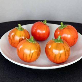 بذر بادمجان قرمز ترکی