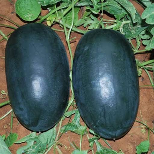 هندوانه الماس سیاه