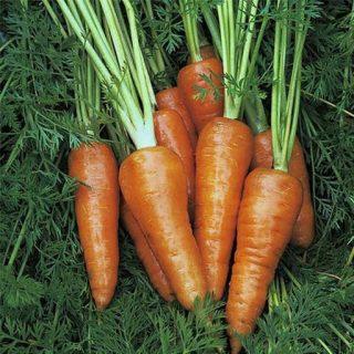 هویج پودر قرمز