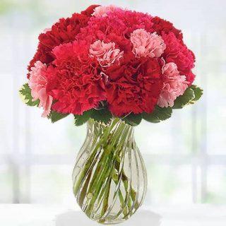 بذر گل میخک پا بلند الوان