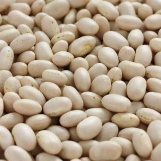 بذر لوبیا سفید