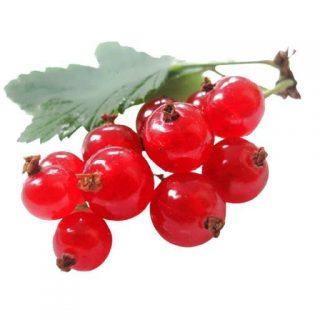 بذر انگور فرنگی قرمز (رد کارنت)