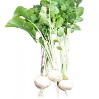 بذر شلغم سفید تخم مرغی