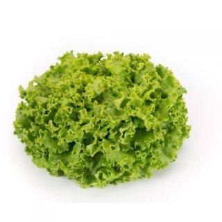 بذر کاهو باتاویا سبز