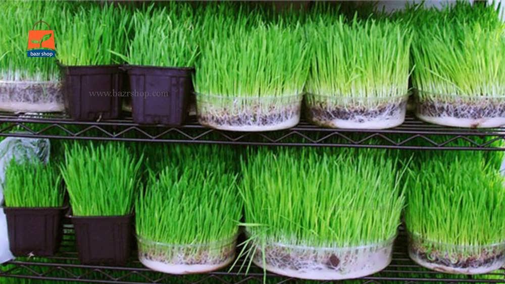 طرز تهیه سبزه خاکشیر