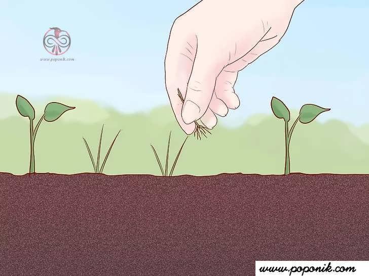 مراقب گیاه کدو خود باشید