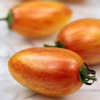 بذر گوجه چری زیتونی ببری