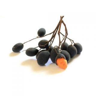 بذر تمبر هندی مخملی