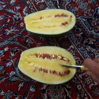 هندوانه دیمی زرد خوب