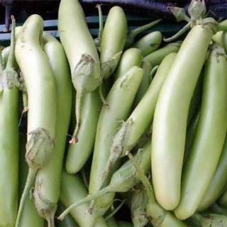 بادمجان سبز بلند لوئیزیانا