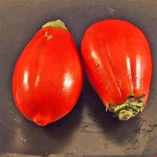 بذر بادمجان قرمز