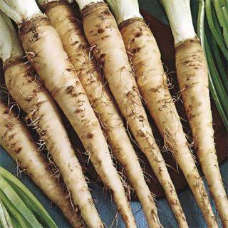 بذر هویج وحشی