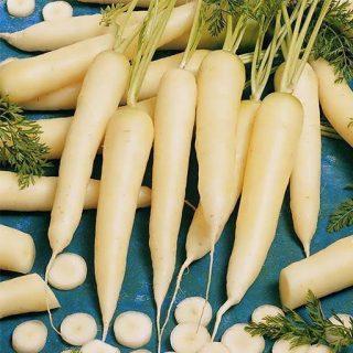 بذر هویج سفید برفی